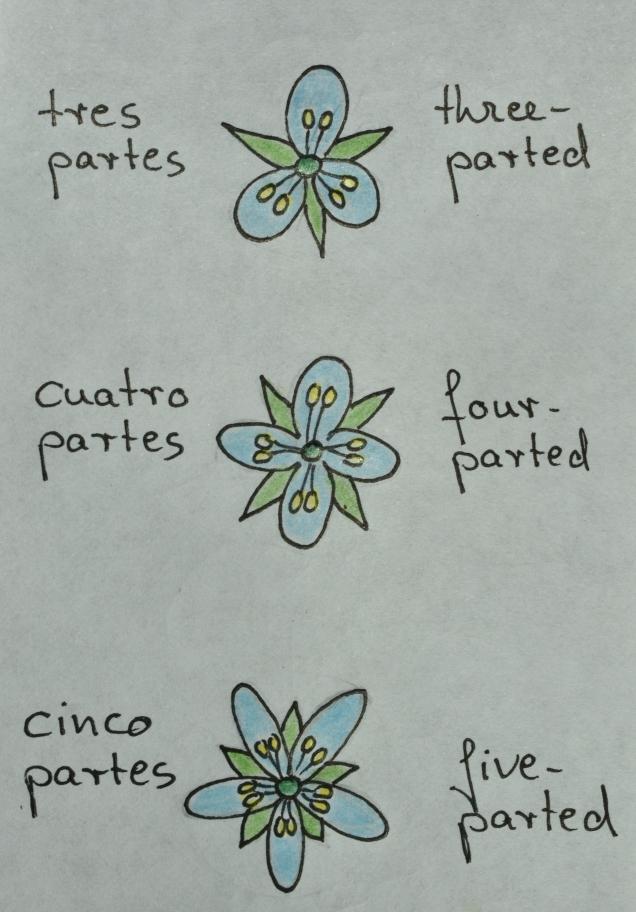 4 examples of regular flowers