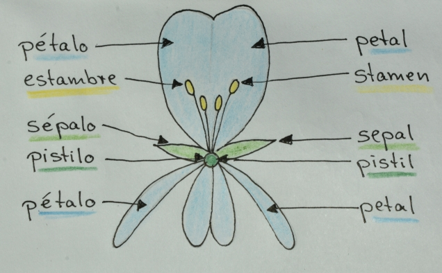 7 irreg flower